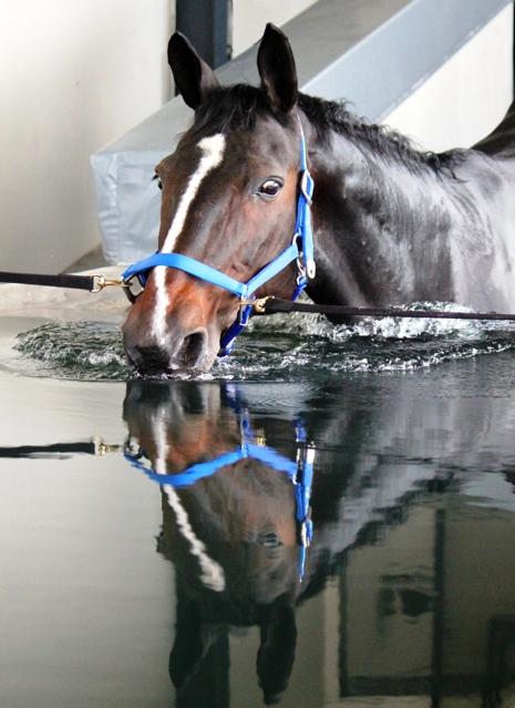 paardenzwembad