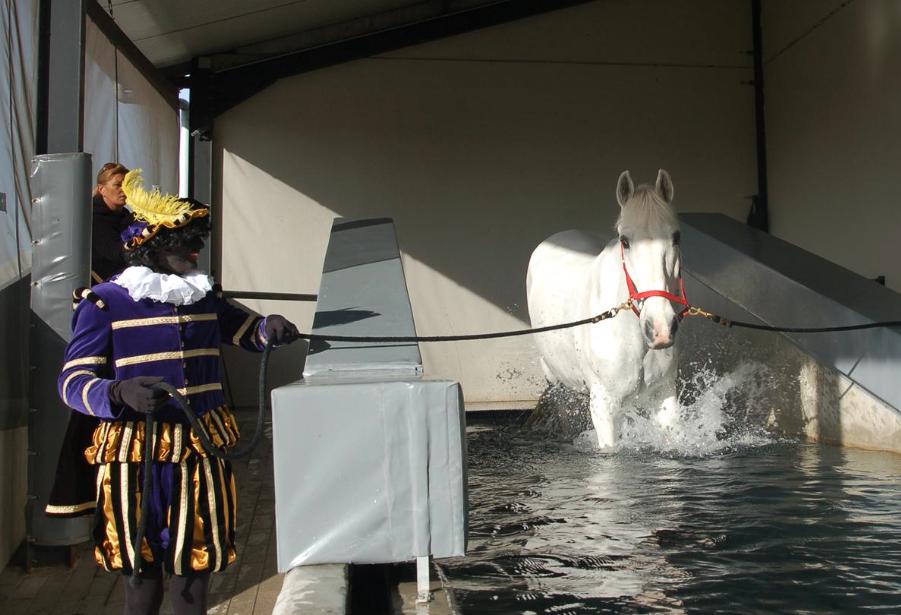 amerigo, paardenzwembad, paard van Sinterklaas